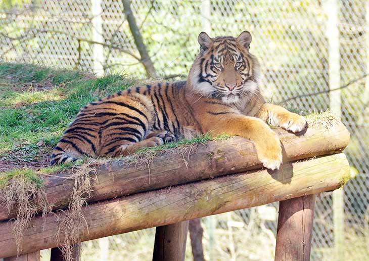 Paignton Zoo Torbay Devon